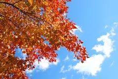 Ветви осени Стоковая Фотография