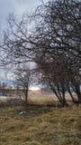 Ветви 2 осени Стоковые Изображения RF