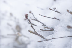 Ветви достигая из cristalls снега Стоковые Изображения