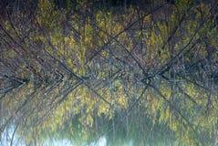ветви отражая воду Стоковая Фотография RF
