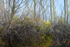 ветви отражая воду Стоковое Изображение