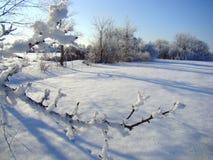 Ветви одетые в снеге Стоковые Фотографии RF