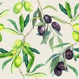 Ветви оливок оливкового дерева картина безшовная акварель Стоковые Изображения RF