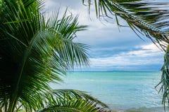 Ветви пальмы дрожа на бурном ветре против seascape Стоковая Фотография RF