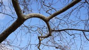 ветви переплетаннсяых деревьев Стоковая Фотография RF