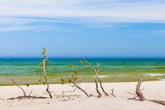Ветви пляжа на песке Стоковое Изображение