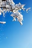 ландшафт зимы Стоковые Фото