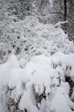 Ветви под сильным снегопадом стоковые фотографии rf