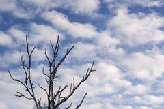 ветви покрыли вал снежка Стоковые Фото