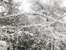 ветви покрыли вал снежка Стоковая Фотография RF