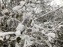 ветви покрыли вал снежка Стоковое Изображение RF