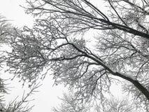 ветви покрыли вал снежка Стоковое Фото