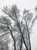 ветви покрыли вал снежка Стоковое фото RF