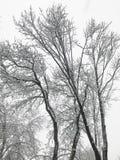 ветви покрыли вал снежка Стоковые Фотографии RF