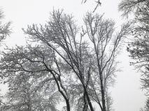 ветви покрыли вал снежка Стоковые Изображения