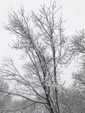 ветви покрыли вал снежка Стоковое Изображение