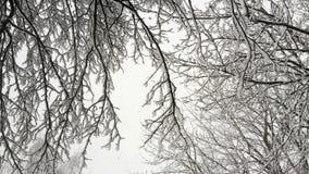 ветви покрыли вал снежка Стоковая Фотография