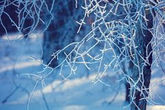 ветви покрыли вал hoarfrost стоковые фотографии rf