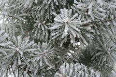 ветви покрыли снежок Стоковая Фотография