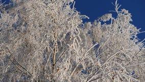 Ветви покрытой снег березы против голубого неба следы снежка силуэта падений железнодорожные тренируют смутное видеоматериал