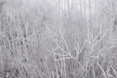 Ветви покрытые заморозком и снегом Стоковые Фотографии RF