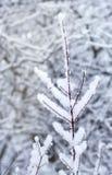 Ветви покрытые с белым снегом стоковые фотографии rf