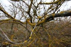Ветви покрытые с мхом стоковая фотография rf