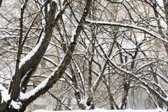 Ветви покрытые с снегом, хаотической картиной ветвей Стоковая Фотография RF