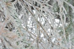 ветви покрыли вал hoarfrost стоковое фото rf