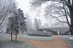 Ветви покрыли изморозь в парке день зим Стоковые Изображения RF