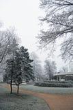 Ветви покрыли изморозь в парке день зим Стоковое фото RF