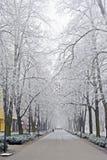 Ветви покрыли изморозь в парке день зим Стоковые Фото