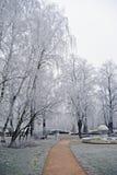 Ветви покрыли изморозь в парке день зим Стоковое Изображение