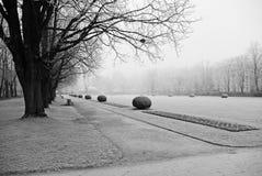 Ветви покрыли изморозь в парке день зим Стоковая Фотография RF