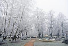 Ветви покрыли изморозь в парке день зим Стоковая Фотография