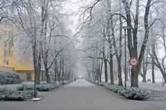 Ветви покрыли изморозь в парке день зим Стоковое Изображение RF