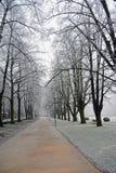 Ветви покрыли изморозь в парке день зим Стоковые Фотографии RF