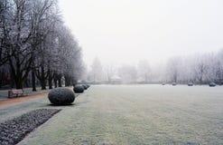 Ветви покрыли изморозь в парке зимний день Стоковая Фотография RF