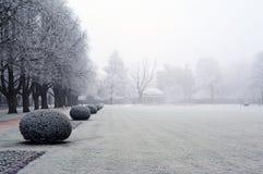 Ветви покрыли изморозь в парке зимний день Стоковое Изображение RF