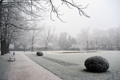 Ветви покрыли изморозь в парке зимний день Стоковые Фото