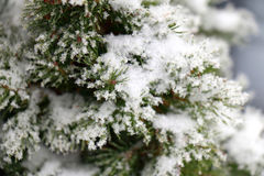 ветви покрыли снежок Стоковые Фотографии RF