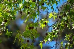 Ветви после полудня дуя в ветерке стоковая фотография