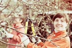 Ветви подрезанные женщинами в саде стоковая фотография