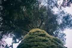 Ветви под сенью Стоковое Фото
