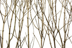 ветви предпосылки Стоковые Изображения RF