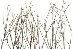 ветви предпосылки Стоковое Изображение RF