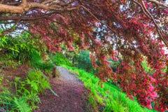 Ветви предусматриванные в розовых цветках сгабривая над тропой стоковое изображение rf