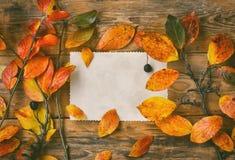 Ветви предпосылки осени с красочными листьями Стоковые Изображения