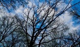 Ветви против неба с белыми облаками Стоковые Фото
