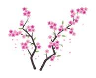 Ветви Сакуры вектора с розовым цветением Стоковые Изображения